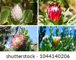 set of four photos of beautiful ... | Shutterstock . vector #1044140206