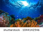 underwater world landscape | Shutterstock . vector #1044142546