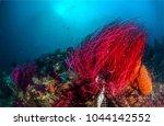 underwater life landscape | Shutterstock . vector #1044142552