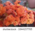 flowers background and textures ... | Shutterstock . vector #1044157705