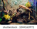 big iguana lizard in terrarium  ... | Shutterstock . vector #1044163972