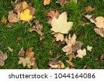 background group autumn orange...   Shutterstock . vector #1044164086