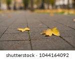 background group autumn orange...   Shutterstock . vector #1044164092