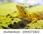 a dragon lizard standing  ...   Shutterstock . vector #1044271822