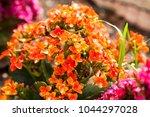 small garden flowers in orange... | Shutterstock . vector #1044297028