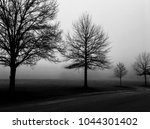 Silhouetted Barren Oak Trees O...