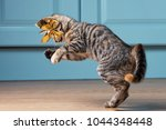 Stock photo cat is catching ribbon with bow 1044348448