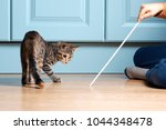 Stock photo boy is playing with kitten cat is hunting on ribbon with bow 1044348478