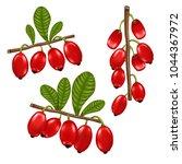 vector realistic barberry... | Shutterstock .eps vector #1044367972