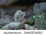 Bush Hyrax Or Yellow Spotted...