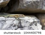 close up of a lizard sitting on ... | Shutterstock . vector #1044400798