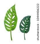 monstera leaves. tropical...   Shutterstock .eps vector #1044406222