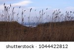 loch view trough reed | Shutterstock . vector #1044422812