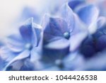 Beautiful Flowers Background...