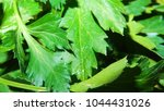 parsley leaf. green parsley.... | Shutterstock . vector #1044431026