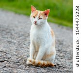 Small photo of Homeless red cat sitting on the warm asphalt road. A stray cat looking at the camera and squinting