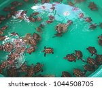 baby turtles  tranquility... | Shutterstock . vector #1044508705