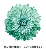 chrysanthemum  turquoise green. ...   Shutterstock . vector #1044585616