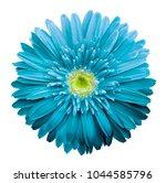 turquoise  gerbera flower on  a ...   Shutterstock . vector #1044585796