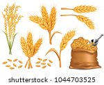 rice   wheat   barley and oat... | Shutterstock .eps vector #1044703525