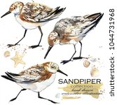 Sandpiper Bird Hand Drawn...