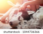 concept moulting dogs. owner... | Shutterstock . vector #1044736366
