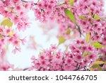 pink sakura flower bloom in... | Shutterstock . vector #1044766705