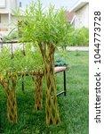 wooden bench in the garden | Shutterstock . vector #1044773728