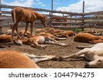 herd of foals waiting for... | Shutterstock . vector #1044794275