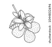 bergamot engraved style kaffir... | Shutterstock .eps vector #1044832696