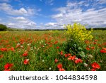 Field Of Wild Flowers   Poppies ...