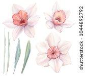 watercolor spring  flowers set... | Shutterstock . vector #1044892792