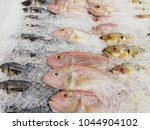 many fishes in iced for sale at ... | Shutterstock . vector #1044904102