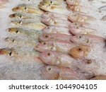 many fishes in iced for sale at ... | Shutterstock . vector #1044904105