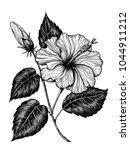 hand drawn hibiscus flower on... | Shutterstock .eps vector #1044911212