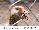 goose in the bird yard  farm .... | Shutterstock . vector #1044913882