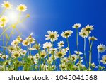 field of daisies  blue sky and... | Shutterstock . vector #1045041568