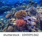 underwater scene of beautiful... | Shutterstock . vector #1045091362
