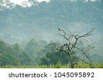 lonely eurasian kestrel or old...   Shutterstock . vector #1045095892