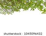 green leaves isolated on white...   Shutterstock . vector #1045096432