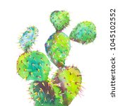 cactus green plant isolated... | Shutterstock . vector #1045102552