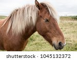bl ndu s  iceland   free horses | Shutterstock . vector #1045132372