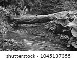 forest stream with shallow ... | Shutterstock . vector #1045137355