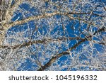 frosty attire of trees 5 | Shutterstock . vector #1045196332