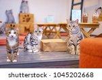 cat cafe. cute furry kittens...   Shutterstock . vector #1045202668