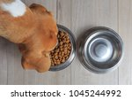 beagle dog eating food from...   Shutterstock . vector #1045244992