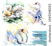 swan hand drawn watercolor... | Shutterstock . vector #1045248352