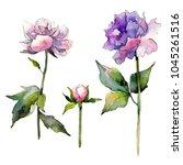 wildflower peony flower in a...   Shutterstock . vector #1045261516