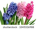 lila pink and purple flowers of ...   Shutterstock . vector #1045326988