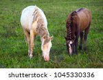 Small photo of Wild free horses graze. The herd is drawish in nature.